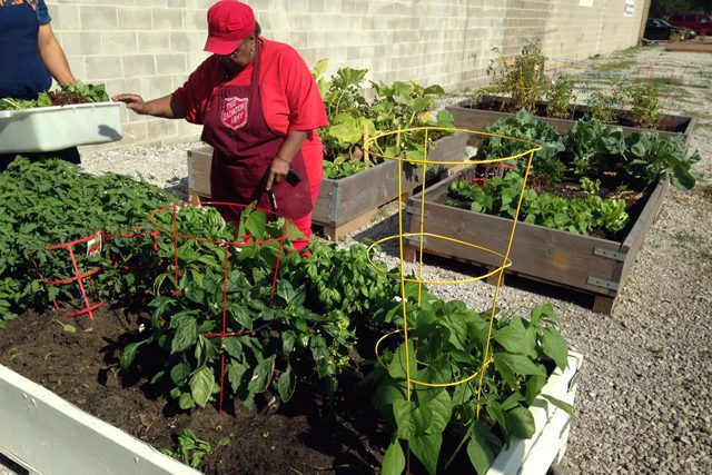 Gardeners tend to the vegetables in the raised beds at the East Chicago Corps