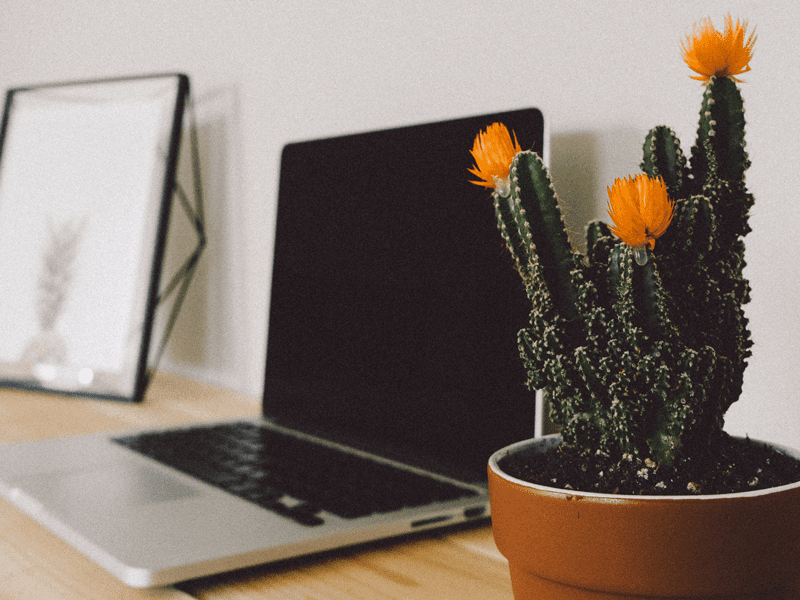 Laptop on table next to cactus