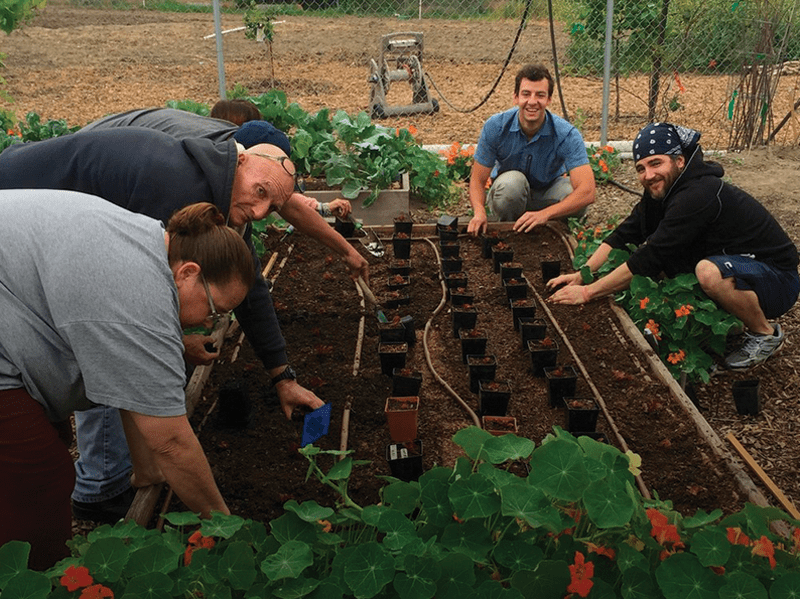 People working at GrowGood garden