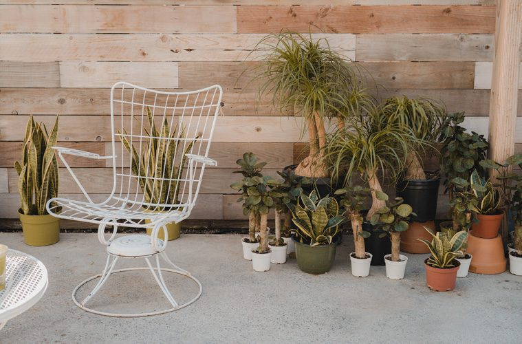 white chair outside next to plants