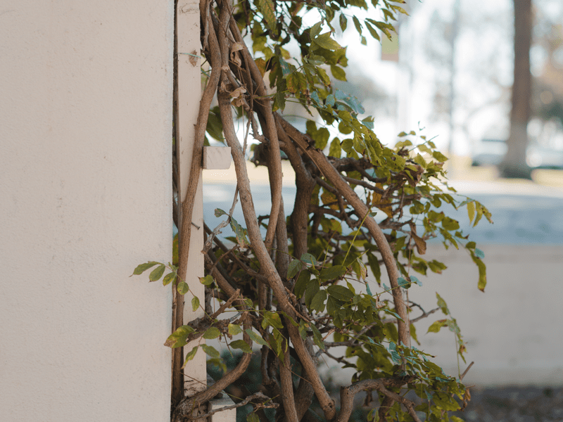Plant on wall outside