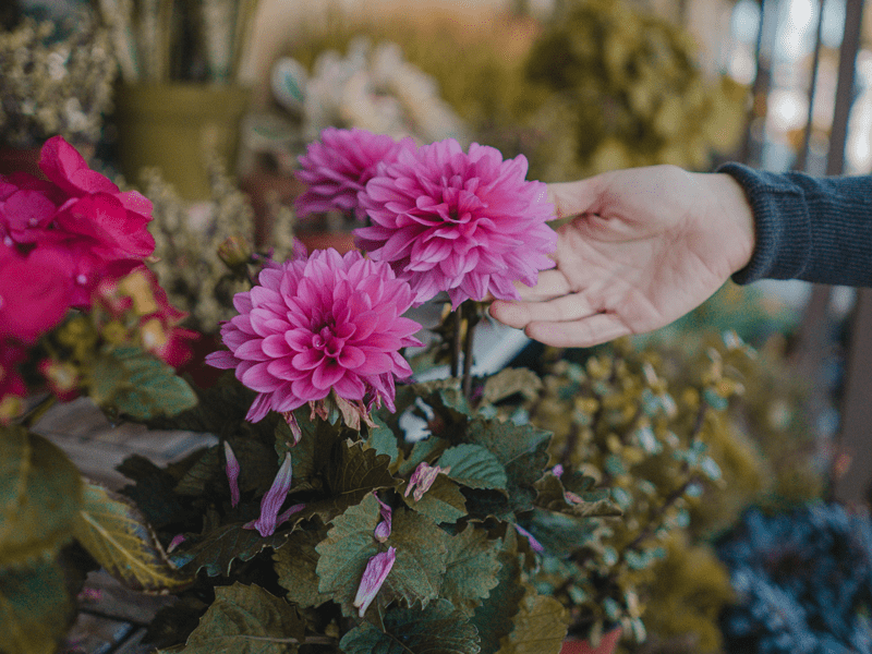 hand touching pink flower